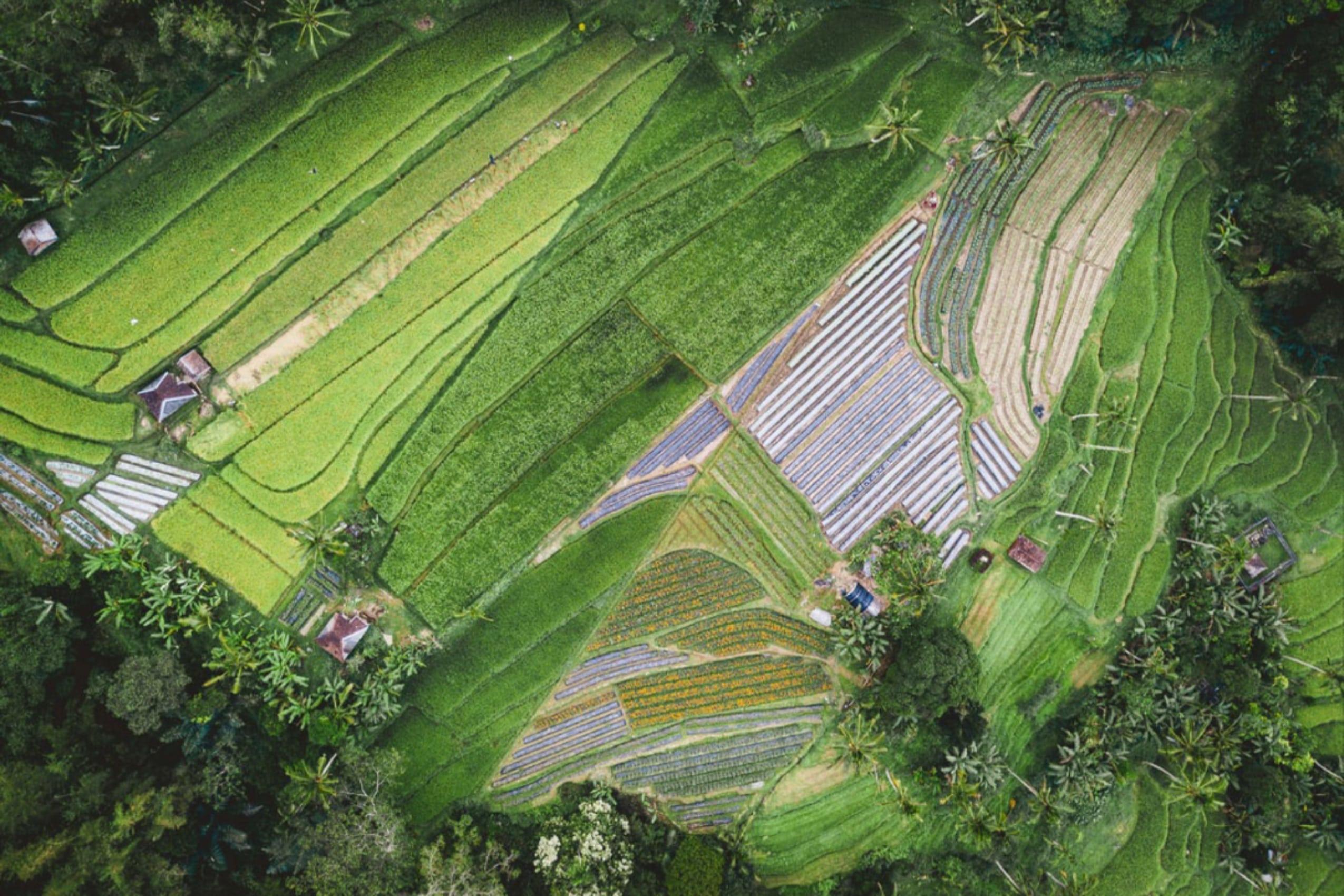 FAO, Apresiasi Prestasi Pertanian Indonesia