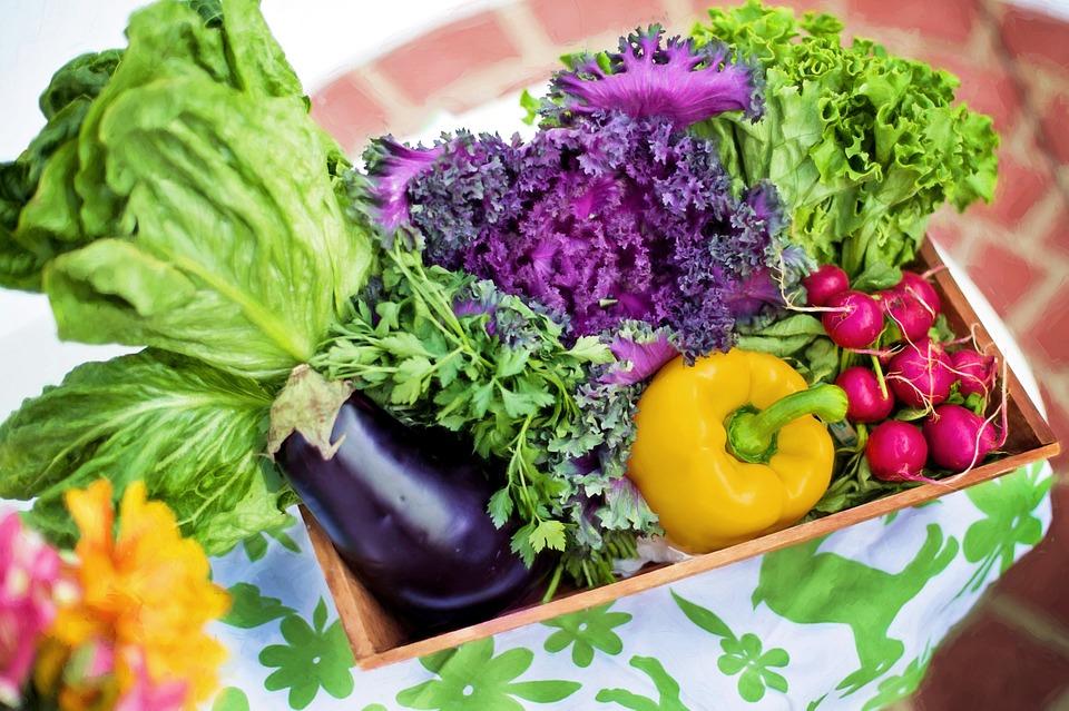 bisnis-sayuran-lahan-investasi-menguntungkan