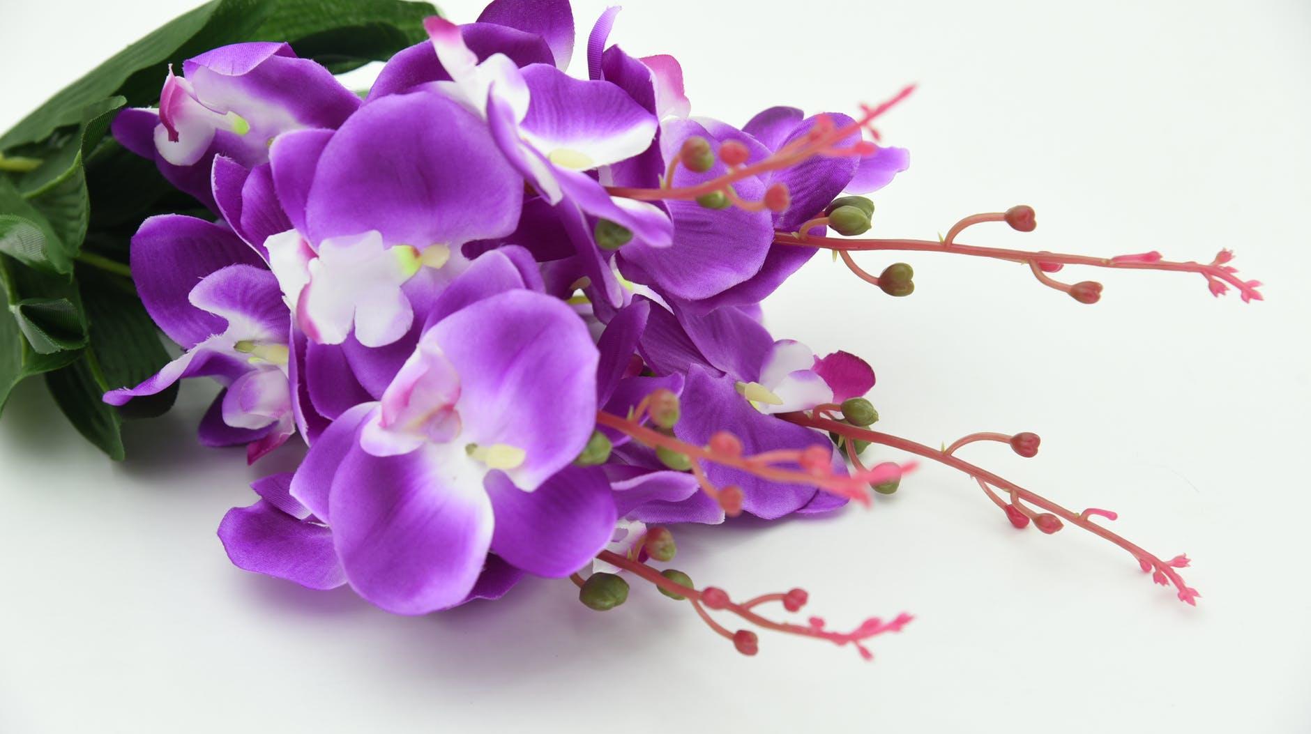 Jenis Bunga Anggrek Termahal, Seperti Apa Bentuknya?