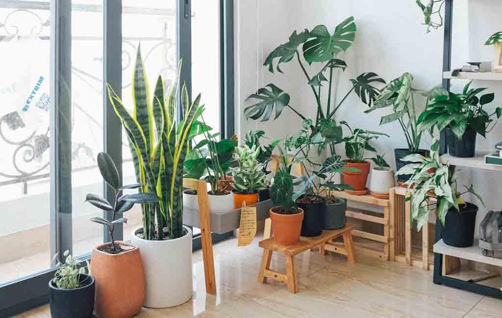 Inspirasi Taman Dalam Rumah Tanpa Modal Besar dan Tetap Asri