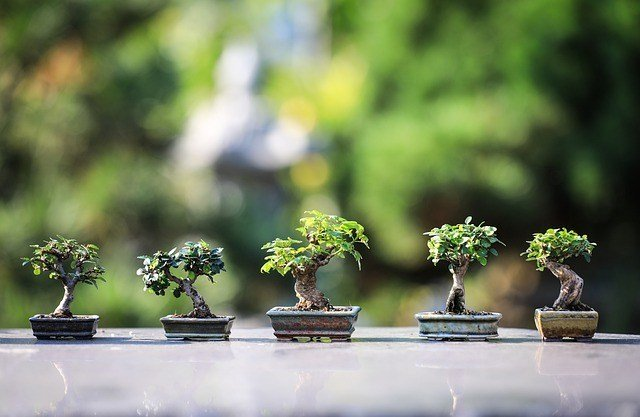 bonsai termahal