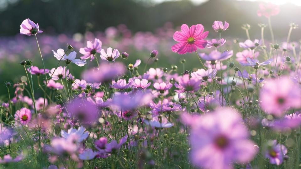 Fungsi Dasar Bunga