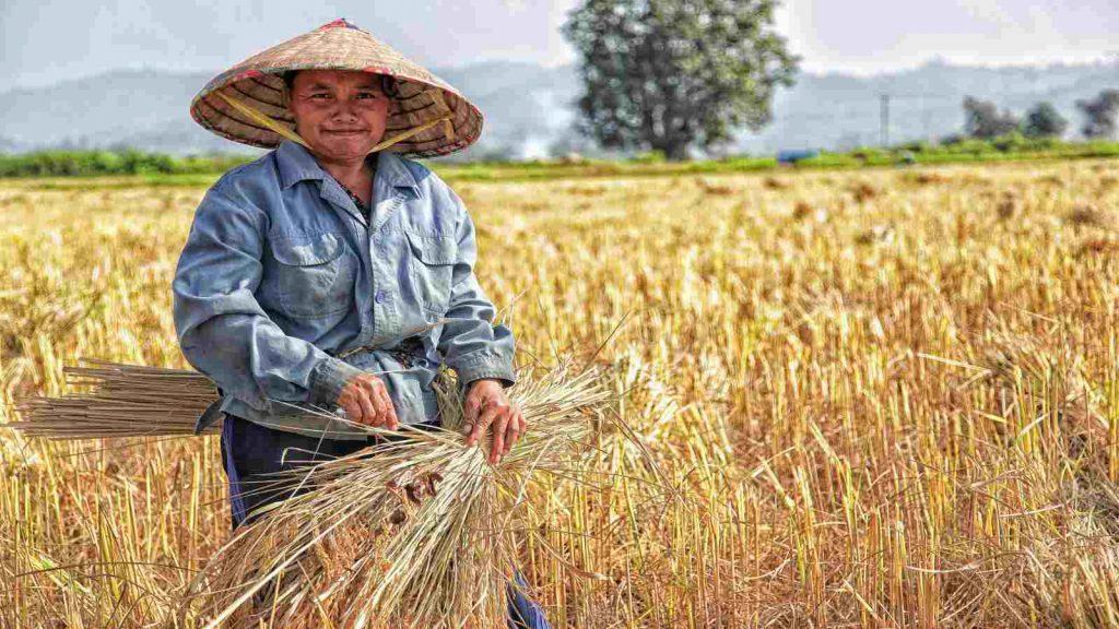 Dana Rupiah Berikan Kemudahan Pinjaman untuk Petani