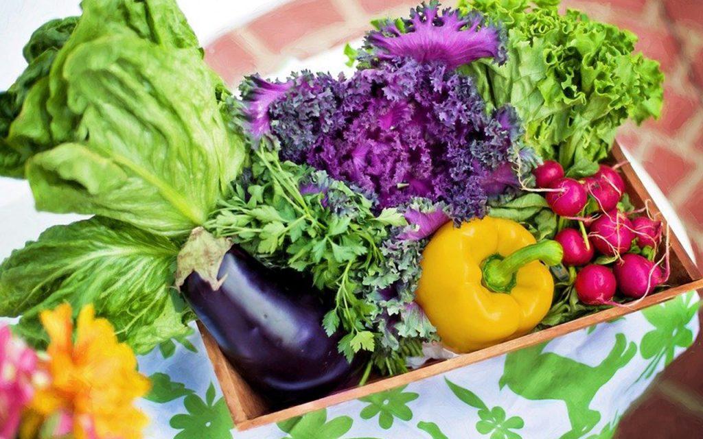 Bisnis Sayuran Bisa Jadi Lahan Investasi Menguntungkan