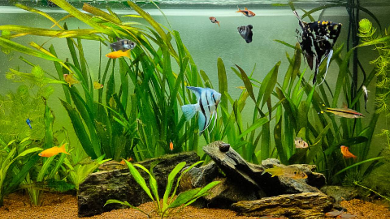Membuat Aquascape