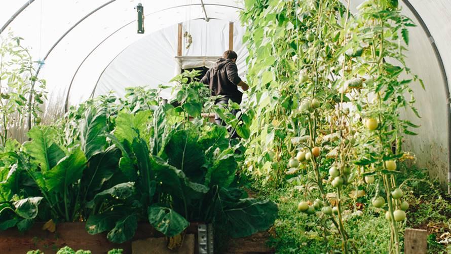 Ilustrasi usaha pertanian rumahan.